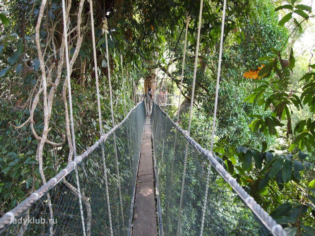 Туристическая поездка в Национальный парк Кинабалу на Борнео (личный опыт туриста)