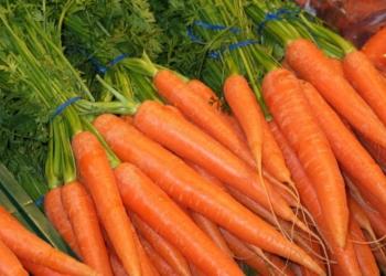 Морковь — полезные свойства, калорийность и состав