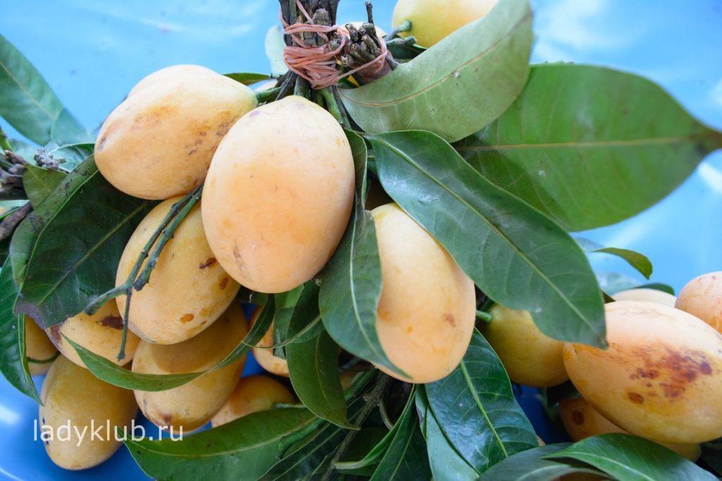 Как хранить манго